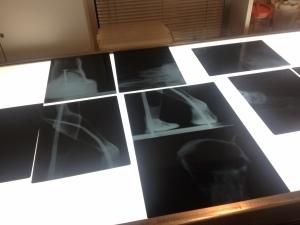 Radiografie della struttura